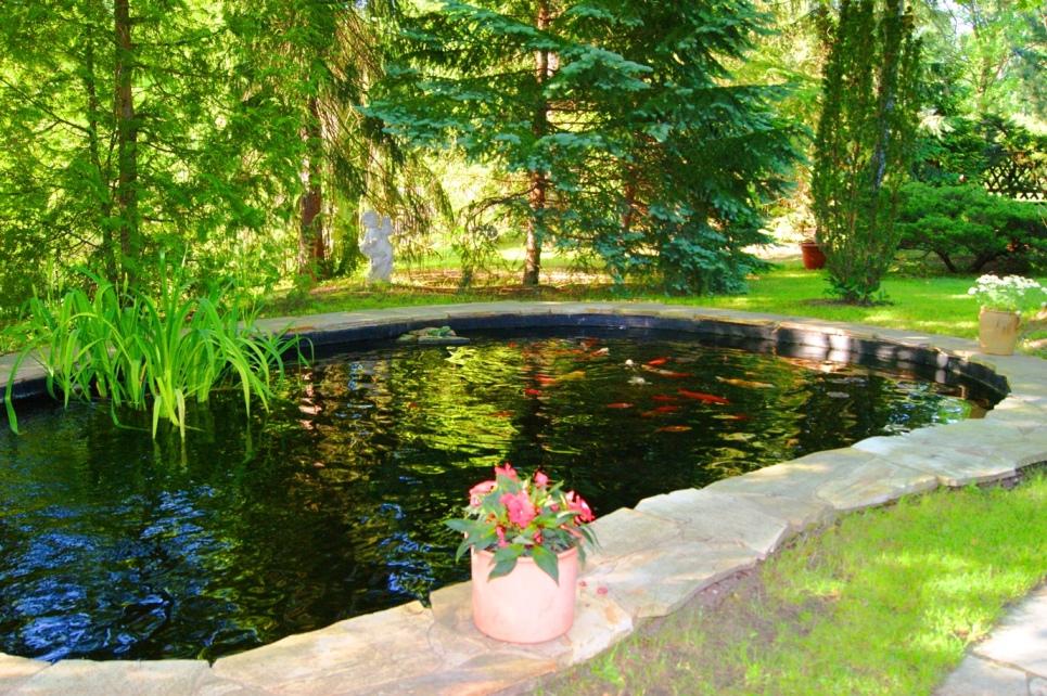 Koi Teich Fische züchten Seerosen Garten